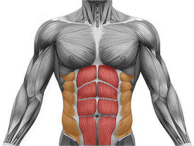 abs muscles