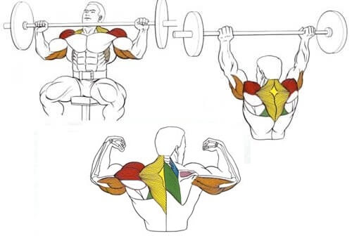 working muscles of barbell shoulder press