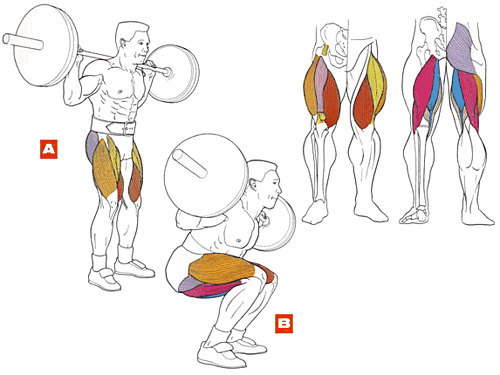 working muscles during barbell squat