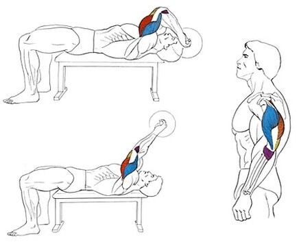 working muscles during barbell triceps extension