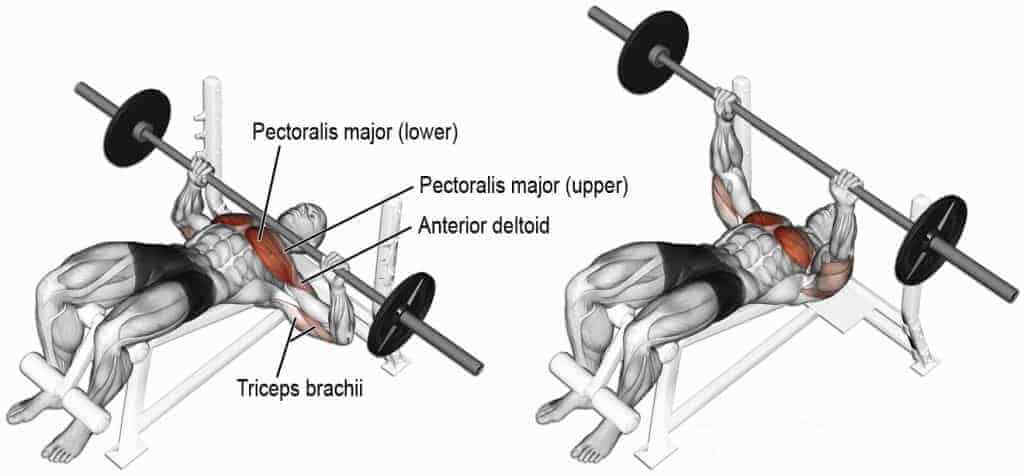 muscles during bench press