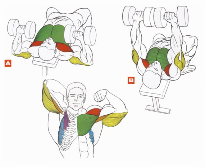 working muscles of dumbbell bench press