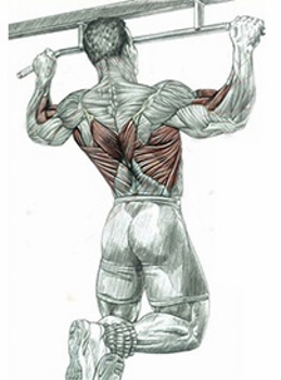 working muscles during pull-ups