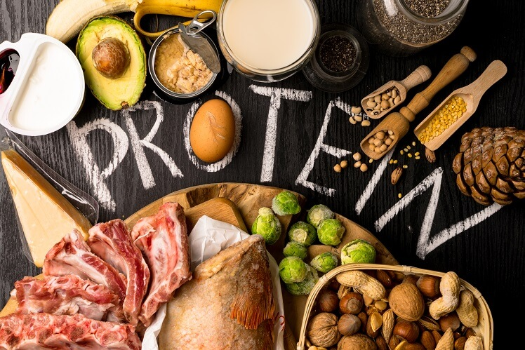 animal plant protein