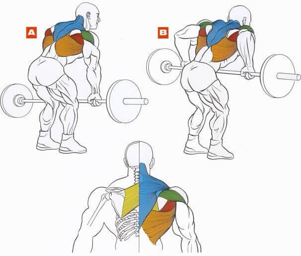 muscles during barbell row
