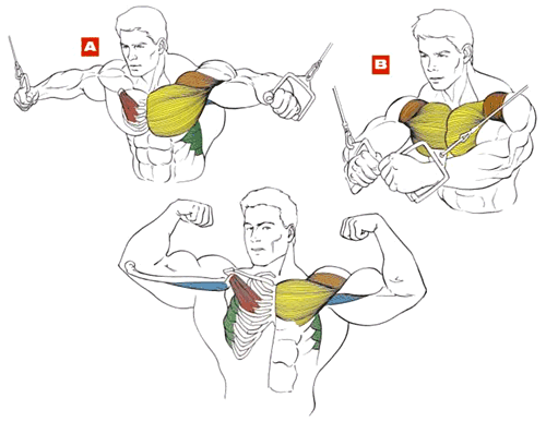 muscles during cable crossover