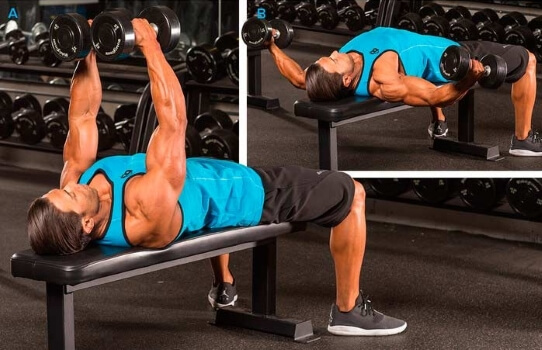 dumbbell chest fly on a flat bench