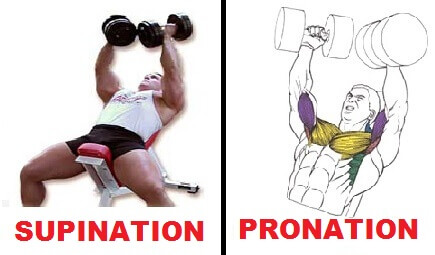 dumbbell chest fly pronation and supination