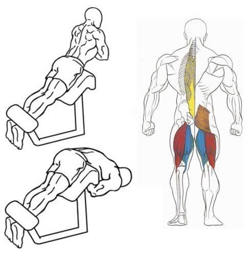 muscles during back extension