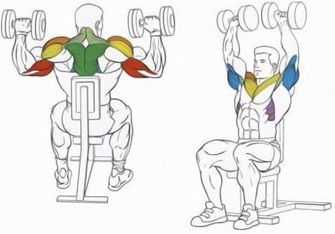 muscles during dumbbell shoulder press