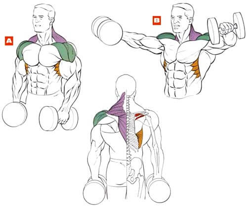 muscles during dumbbell side lateral raise