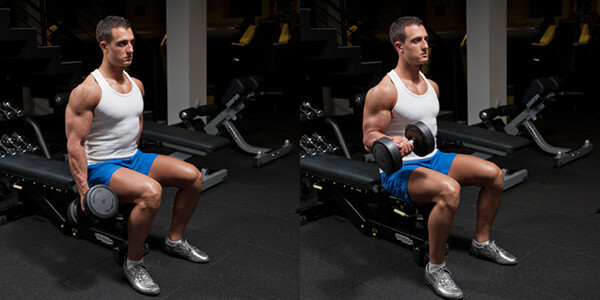 seated dumbbell biceps curl with supination