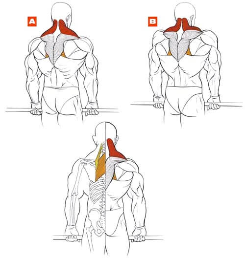 muscles during shrugs
