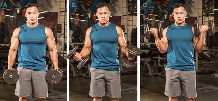 standing dumbbell biceps curl with supination