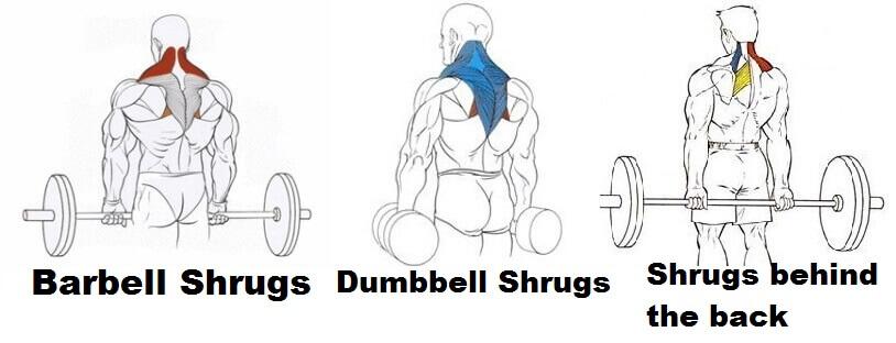 varieties of shrugs